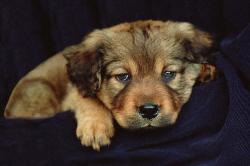 Puppy2001